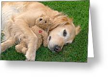 Golden Retriever Dog Teddy Bear Love Greeting Card