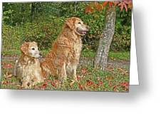 Golden Retriever Dogs In Autumn Greeting Card