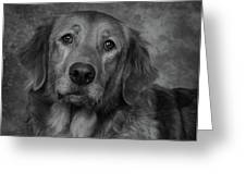 Golden Retriever In Black And White Greeting Card