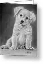 Golden Retriever Puppy Drawing Greeting Card