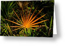Golden Saw Palmetto Greeting Card