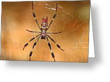 Golden Silk Spider 3 Greeting Card