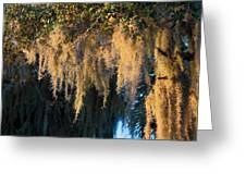 Golden Spanish Moss Greeting Card