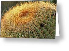 Golden Spines Greeting Card