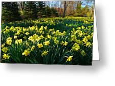 Golden Spring Carpet Greeting Card