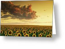 Golden Sunflower Skies Greeting Card