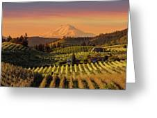 Golden Sunset Over Hood River Pear Orchard Greeting Card