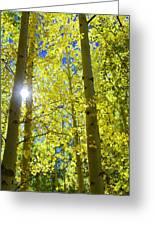Golden Sunshine Greeting Card