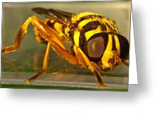 Golden Syrphid Greeting Card