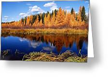 Golden Tamaracks Along The Spruce River Greeting Card