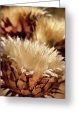 Golden Thistle II Greeting Card
