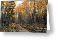 Golden Trail Greeting Card by Barbara Schultheis