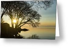 Golden Tranquility - Lacy Tree Silhouettes On The Lake Shore Greeting Card