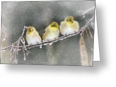 Golden Trio Greeting Card