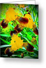 Golden Trio Of Iris Greeting Card