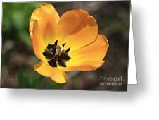 Golden Tulip Petals Greeting Card