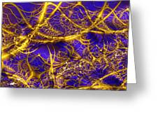 Golden Vines Blue Velvet Greeting Card