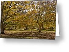 Golden Walnut Orchard II Greeting Card