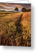 Golden Waves Of Grain Greeting Card