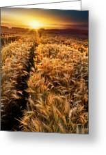 Golden Wheat Dreamscape Greeting Card