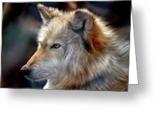 Golden White Wolf Greeting Card