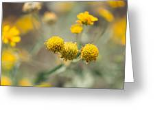 Golden Wildflowers Greeting Card