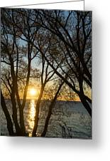 Golden Willow Sunrise - Greeting A Bright Day On The Lake Greeting Card