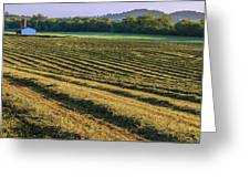 Golden Windrows Greeting Card