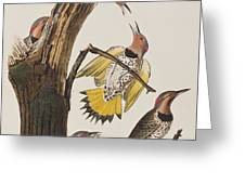 Golden-winged Woodpecker Greeting Card