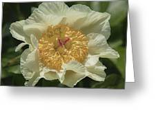 Golden Wings Peony Greeting Card