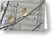 Golden With Snow Greeting Card