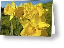 Golden Yellow Daffodil Flower Garden Art Prints Baslee Troutman Greeting Card