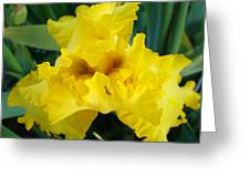 Golden Yellow Iris Flower Garden Irises Flora Art Prints Baslee Troutman Greeting Card