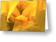 Golden Yellow Iris Greeting Card
