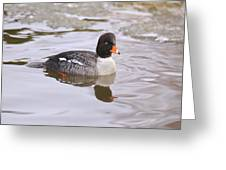 Goldeneye Greeting Card