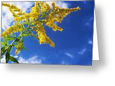 Goldenrod In The Sky Greeting Card