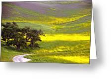 Goldenrod Oak Santa Ynez California 2 Greeting Card