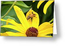 Goldenrod Soldier Beetle Greeting Card