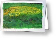 Goldenrods In Field Greeting Card