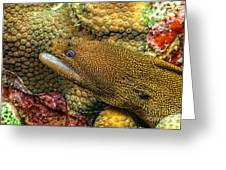 Goldentail Moray Greeting Card