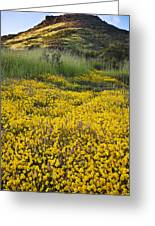 Goldfields And Grasses Greeting Card