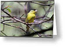 Goldfinch 042914a Greeting Card