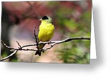 Goldfinch 042914d Greeting Card