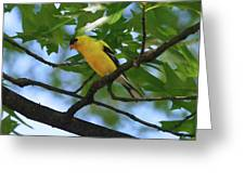 Goldfinch In Oak Tree Greeting Card