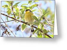 Goldfinch In Spring Tree Greeting Card by Carol Groenen