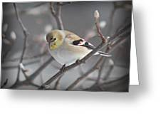 Goldfinch In Winter Greeting Card