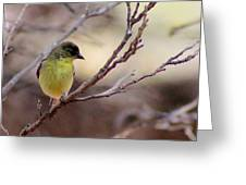 Goldfinch On Branch 032814a Greeting Card