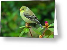Goldfinch On Green Greeting Card