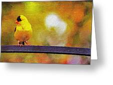 Goldfinch Sitting Pretty Greeting Card