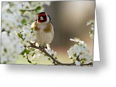 Goldfinch Spring Blossom Greeting Card